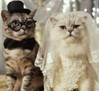 結婚式用犬ネコアイテムの通販