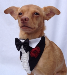 犬用タキシード_首輪_通販_結婚式