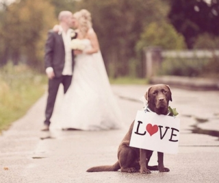 pet-in-wedding-4.jpg