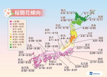 150218桜開花予想