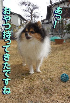 DSCN9515.jpg