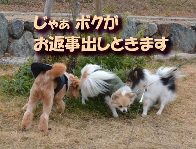 DSC_9004_20150110173113607.jpg