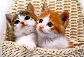 22匹の子猫