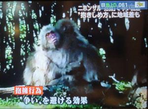 猿の挨拶blog02