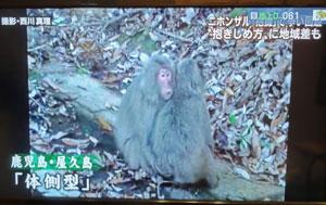 猿の挨拶blog03