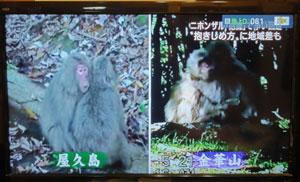 猿の挨拶blog01
