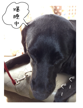 爆睡する犬