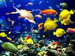 fish_convert_20150303140444.jpg