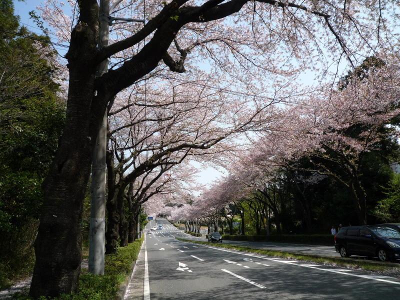 20180401-1-桜