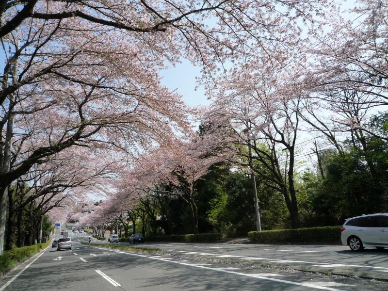 20180401-3-桜
