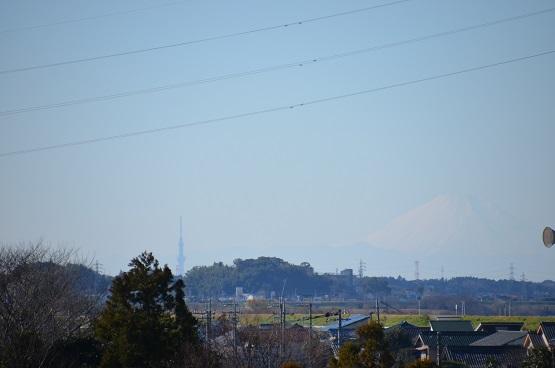 20141223白鳥の郷 (5)