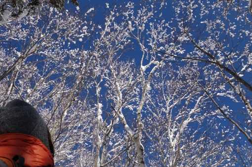 見上げると満開の雪の花
