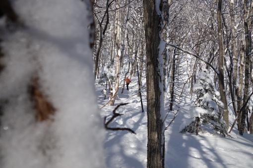 林間を縫うように