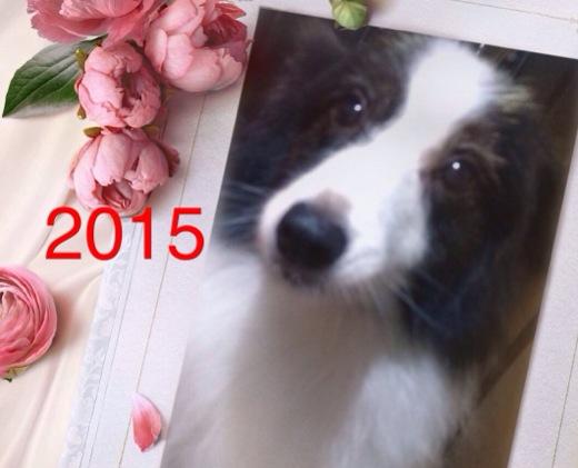 20150101054100f9e.jpg