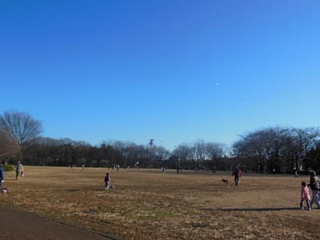公園の凧揚げ