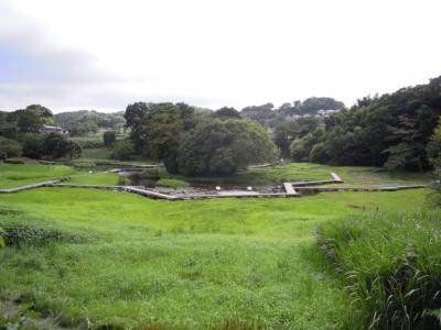 厳島湿生公園150810