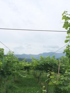 2015 07 18 蔵王ウッディファーム -1