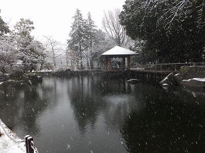 蚕糸の森公園も雪