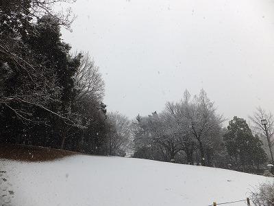 雪の蚕糸の森公園