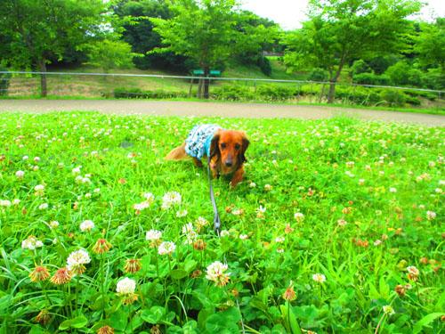 2015-06-yamapark13-2.jpg