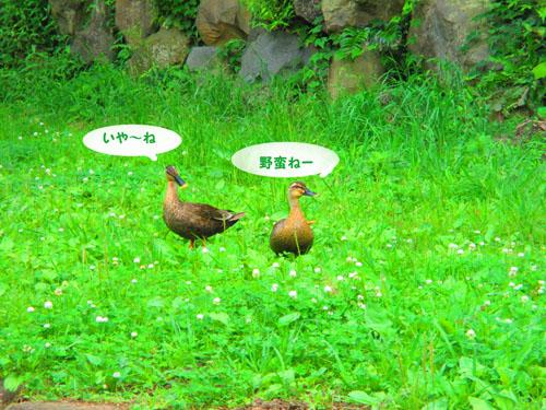 2015-06-yamapark23.jpg