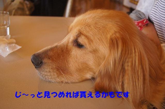 DSC06298.jpg