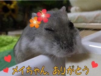 メイちゃん1-s