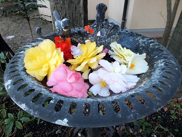 水盤の花(73544 byte)