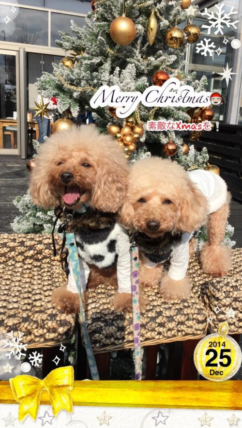 IMG_0881メリークリスマス_convert_20141225191743