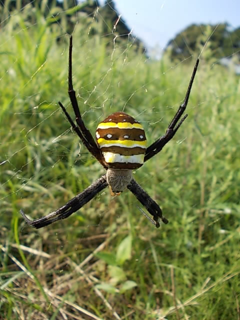 Spider 20150815