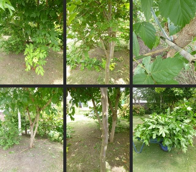 P1820144-horz-vert.jpg
