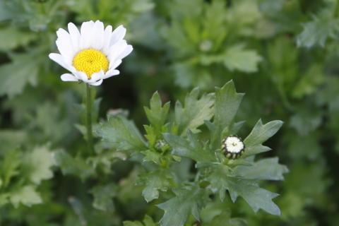 20150215flower.jpg