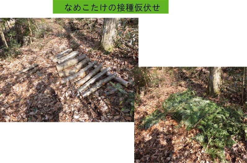 CIM604-namekokarihuse.jpg