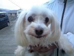 広本町迷い犬