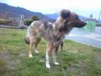 迷い犬♀ (2)