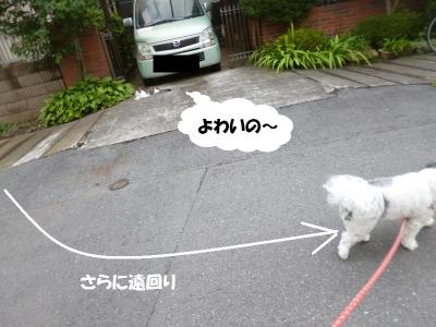 ネコ勝負2戦目