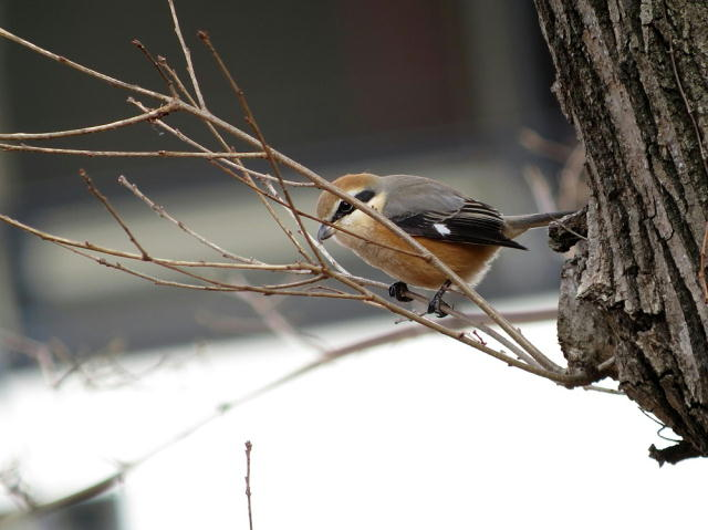 20150115-2 IMG_a0427j
