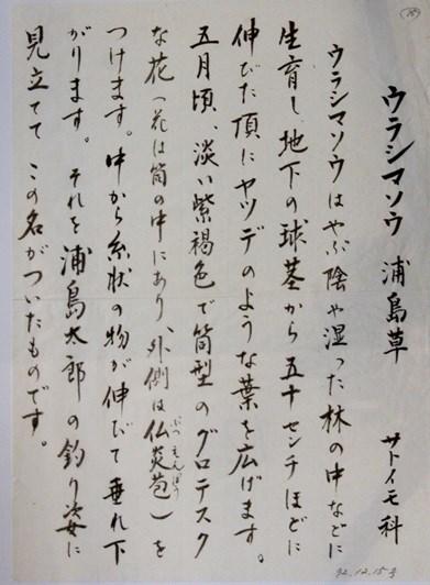 watermarked-DSC04355ウラシマソウ右 (2)
