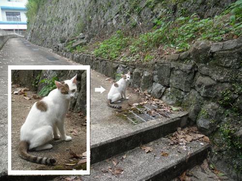 美人なネコさん。