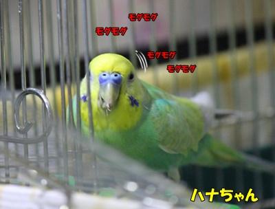 IMG270203-1.jpg