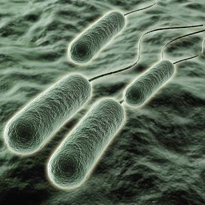 Microbiology_420x420_Multidrug_resistant_Pseudomonas_aeruginosa_65453743.jpg