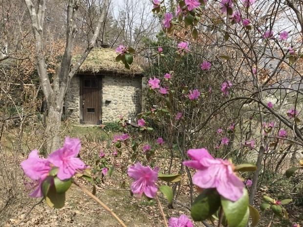 石積みの丸い小屋とエゾムラサキ