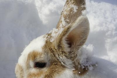 雪遊びルナ9