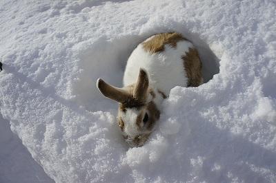 雪遊びルナ4