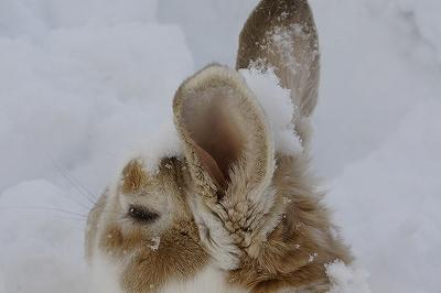 雪遊びルナ6