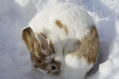 雪遊びルナ7