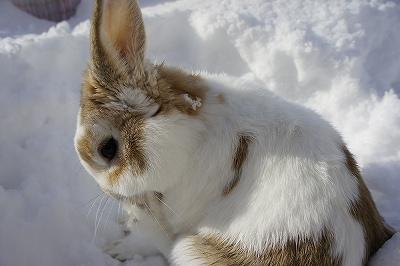 雪遊びルナ8