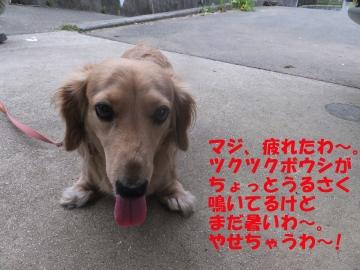 おつまみ枝豆4