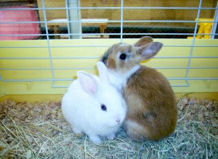 2014-05-26 26年度5月24日、25日川和保育園、ウサギ 011 (800x586)