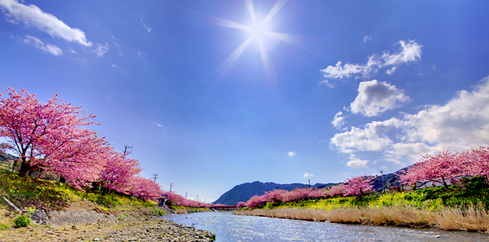sakura_photo03.jpg